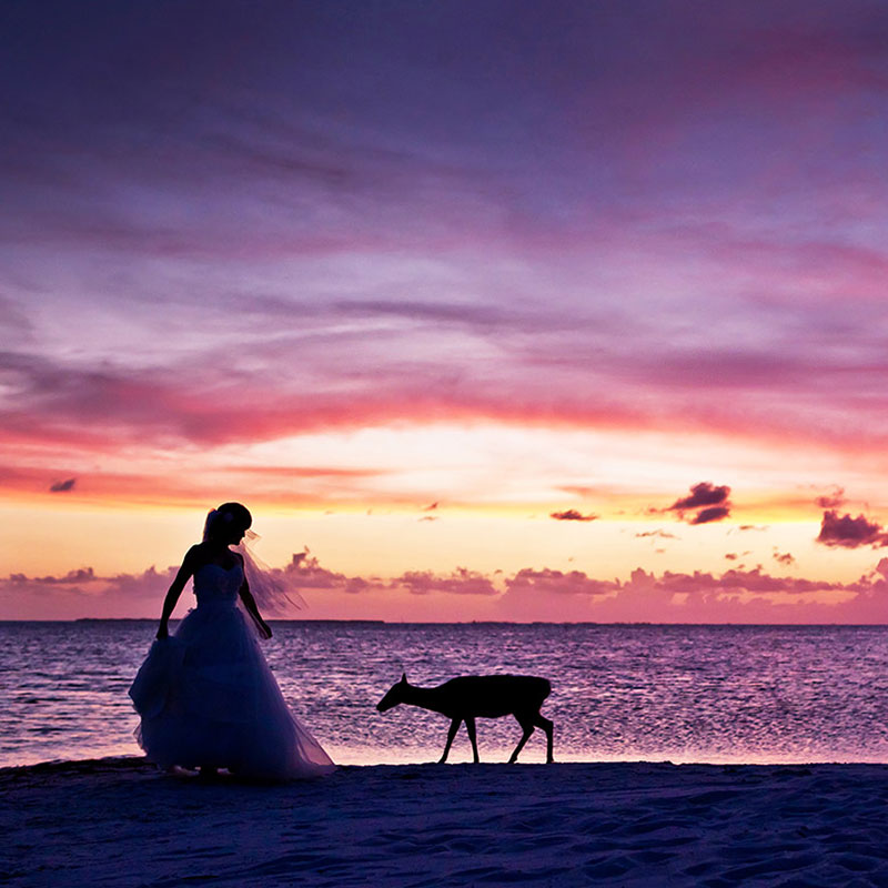 A Private Beach Wedding